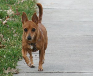 http://www.hpplnj.org/wp/wp-content/uploads/2015/12/dog-picture-300x243.jpg