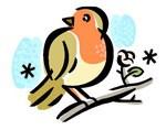 bird spring