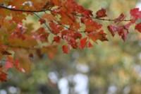 fall foliage autumn leaves