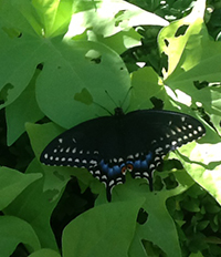 butterfly outside Highland Park Public Library