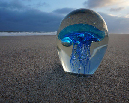 Jellyfish, photo by Judy Weinberg