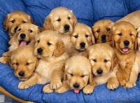 https://www.hpplnj.org/wp-content/uploads/2019/02/Dogs-200x147.png