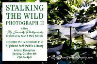Stalking the Wild Photography II